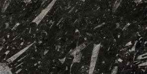 BLACK_FOSSIL_POL_J081114A_2CM_CLOSEUP