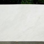 biancorhinopolj081815b2cm